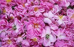 گلاب شیراز