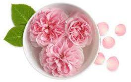 گلاب ارگانیک