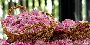خرید پستی گلاب خوب