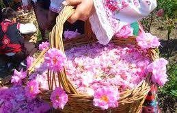 خرید مستقیم گلاب اصل از شرکت زهرا