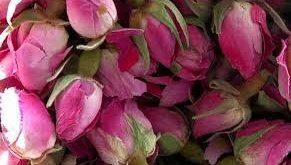 تولید گلاب گل محمدی رنگی