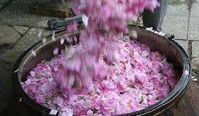 فروش عمده گلاب نیاسر