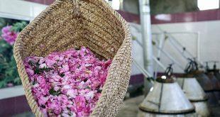 تولید کننده گلاب