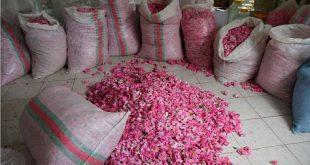 مرکز فروش گلاب