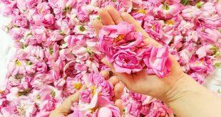 بهترین گلاب کاشان